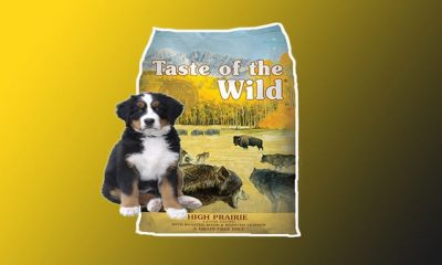 The Best Highly Digestible Dry Dog Food With Real Roasted Bison